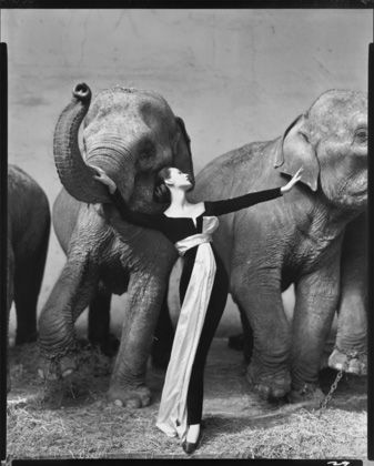 Richard Avedon, Dovima with Elephants, Evening Dress by Dior, Cirque d'Hiver, Paris, August 1955 © 2015 The Richard Avedon Foundation