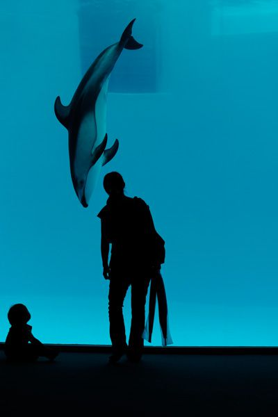 Exercice photo : photographier dans un aquarium