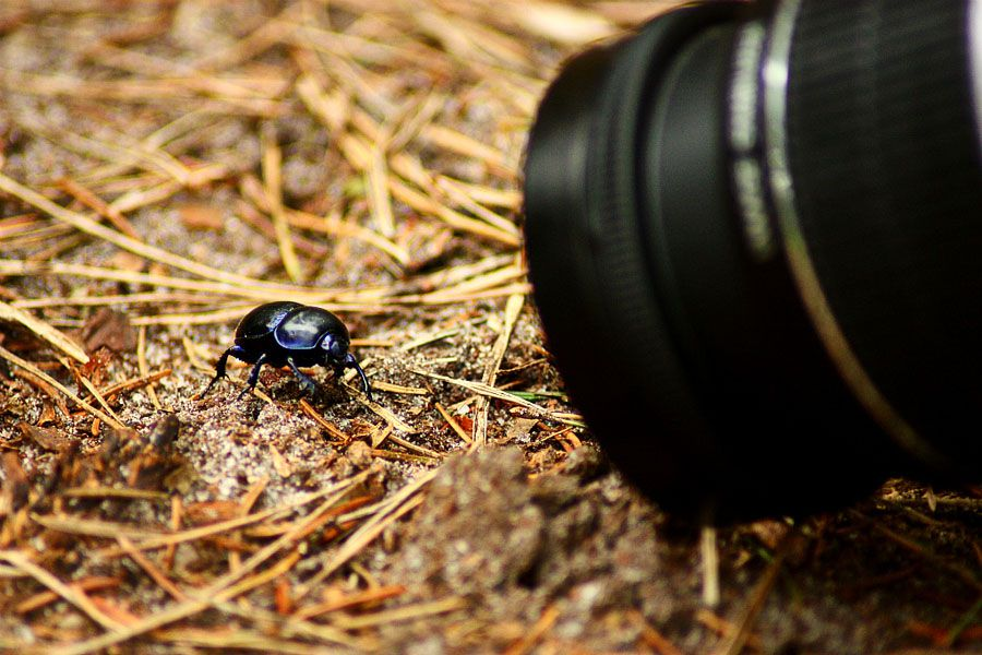 Comprendre les notions importantes en macrophotographie