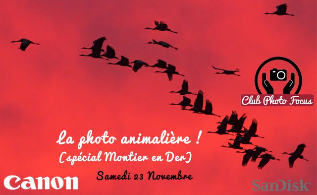 club photo focus : photo animalière