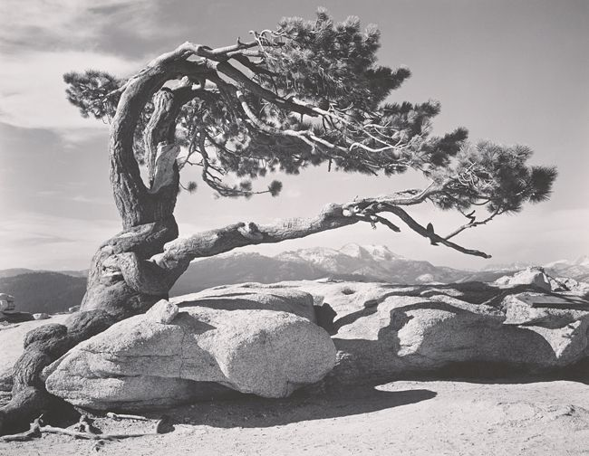 Grand photographe : Ansel Adams