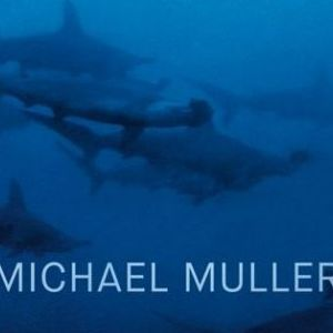 Michael Muller - Requins